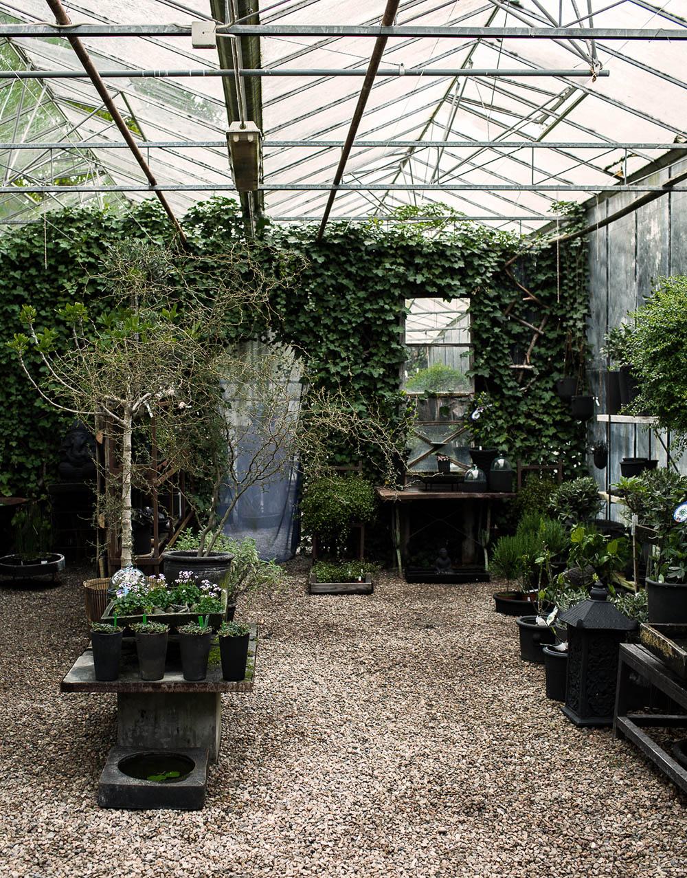 Daniella´s trädgård | Bästa plantskolan 5