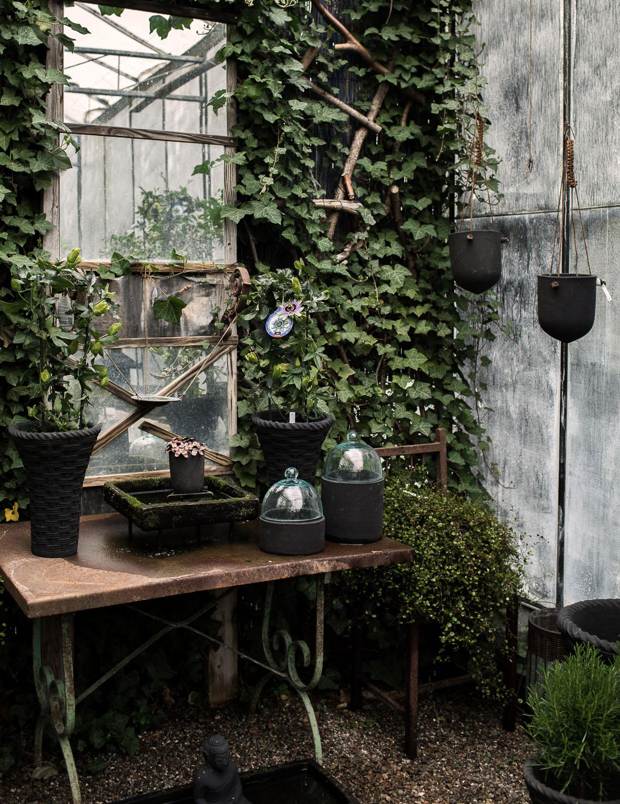 Daniella´s trädgård | Bästa plantskolan 6