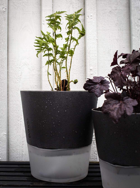 Daniella´s trädgård -omplantering i kruka_eva solo